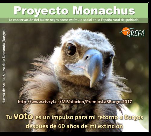 El Proyecto Monachus, nominado a los premios de TV8 Burgos
