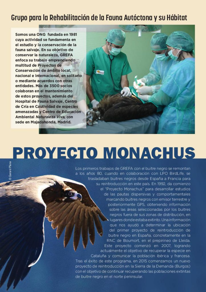 https://proyectomonachus.grefa.org/wp-content/uploads/2017/06/cuadernillo_proyecto_monachus-page-002-1-722x1024.jpg