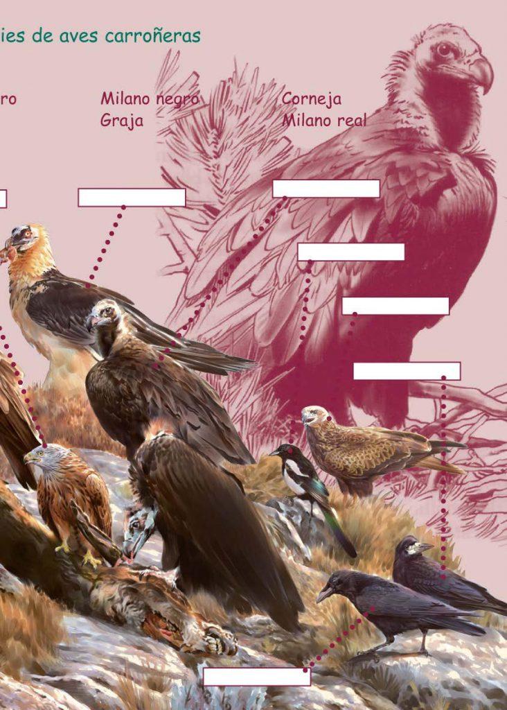 https://proyectomonachus.grefa.org/wp-content/uploads/2017/07/06-Buitre-negro-page-009-732x1024.jpg