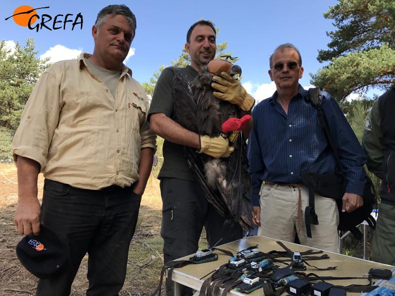 De izquierda a derecha, Ernesto Álvarez, presidente de GREFA, un agente medioambiental de la Rioja y Miguel Aymerich, subdirector general de Medio Natural del MAPAMA, posan con uno de los buitres negros marcados.