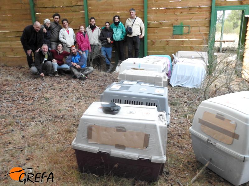 Trabajadores y voluntarios de GREFA posan junto a los trasportines que contienen algunos de los buitres negros marcados, instantes antes de devolver a estas aves al jaulón de aclimatación.
