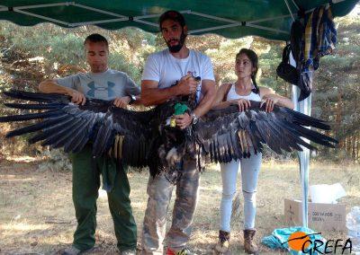 Un buitre negro es mostrado con las alas abiertas tras haber sido sometido a la decoloración de algunas de sus plumas.