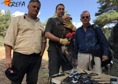 De izquierda a derecha, Ernesto Álvarez, presidente de GREFA, un agente medioambiental de la Rioja y Miguel Aemerich, subdirector general de Medio Natural del MAPAMA posan con uno de los buitres negros marcados.