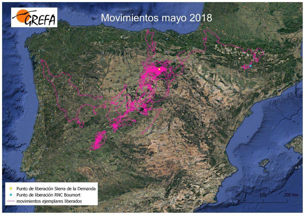Figura 3: Movimientos de los buitres negros liberados en la Sierra de la Demanda durante el mes de mayo.