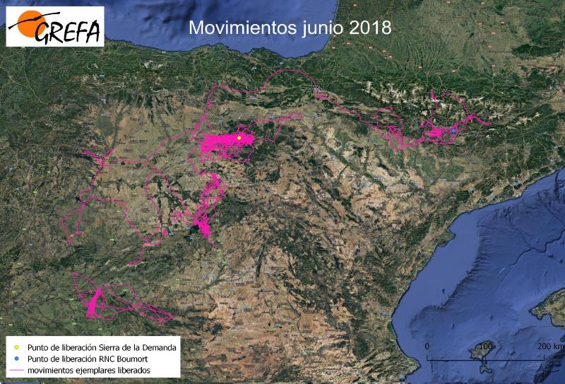 Figura 3. Mapa de movimientos de los buitres liberados en octubre de 2017 en la Sierra de la Demanda.