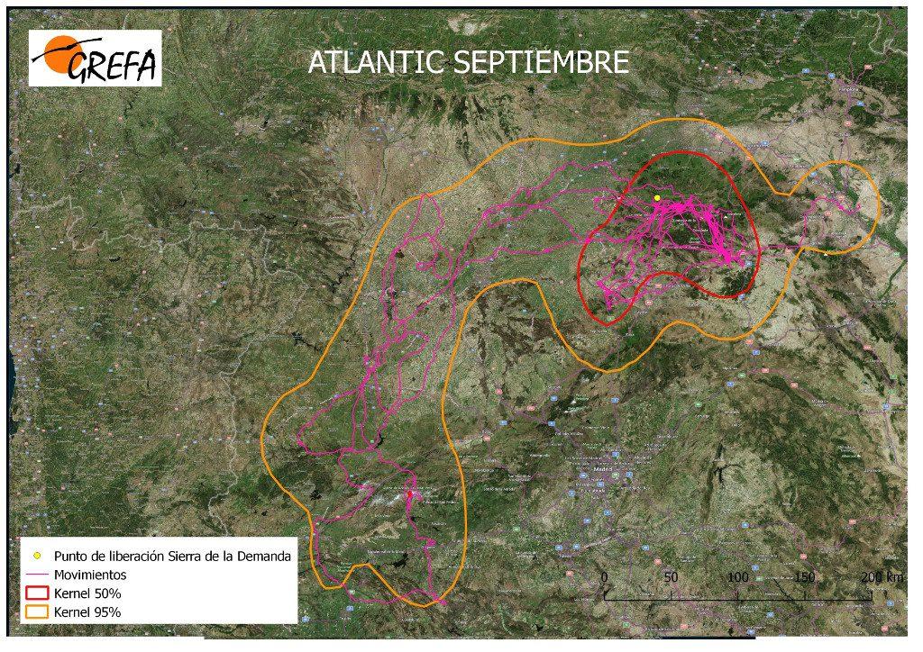 Figura 10. Movimientos (morado) y área vital (rojo) y de campeo (naranja) de Atlantic durante el mes de septiembre.