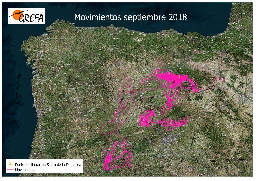 Figura 2. Mapa de movimientos, durante el mes de septiembre, de los buitres liberados en octubre de 2017 en la Sierra de la Demanda.