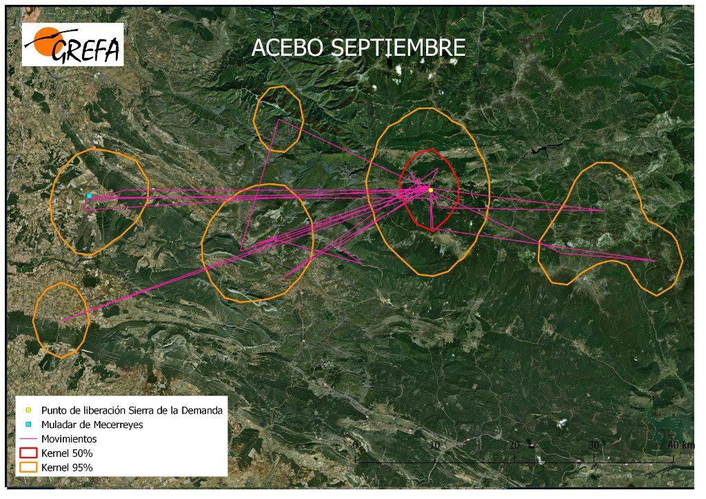 Figura 3. Movimientos (morado) y área vital (rojo) y de campeo (naranja) de Acebo durante el mes de septiembre.