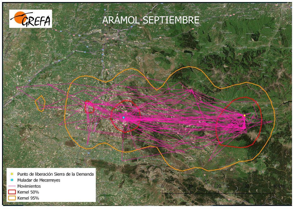 Figura 4. Movimientos (morado) y área vital (rojo) y de campeo (naranja) de Arámol durante el mes de septiembre.