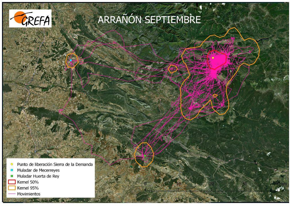 Figura 5. Movimientos (morado) y área vital (rojo) y de campeo (naranja) de Arrañón durante el mes de septiembre.