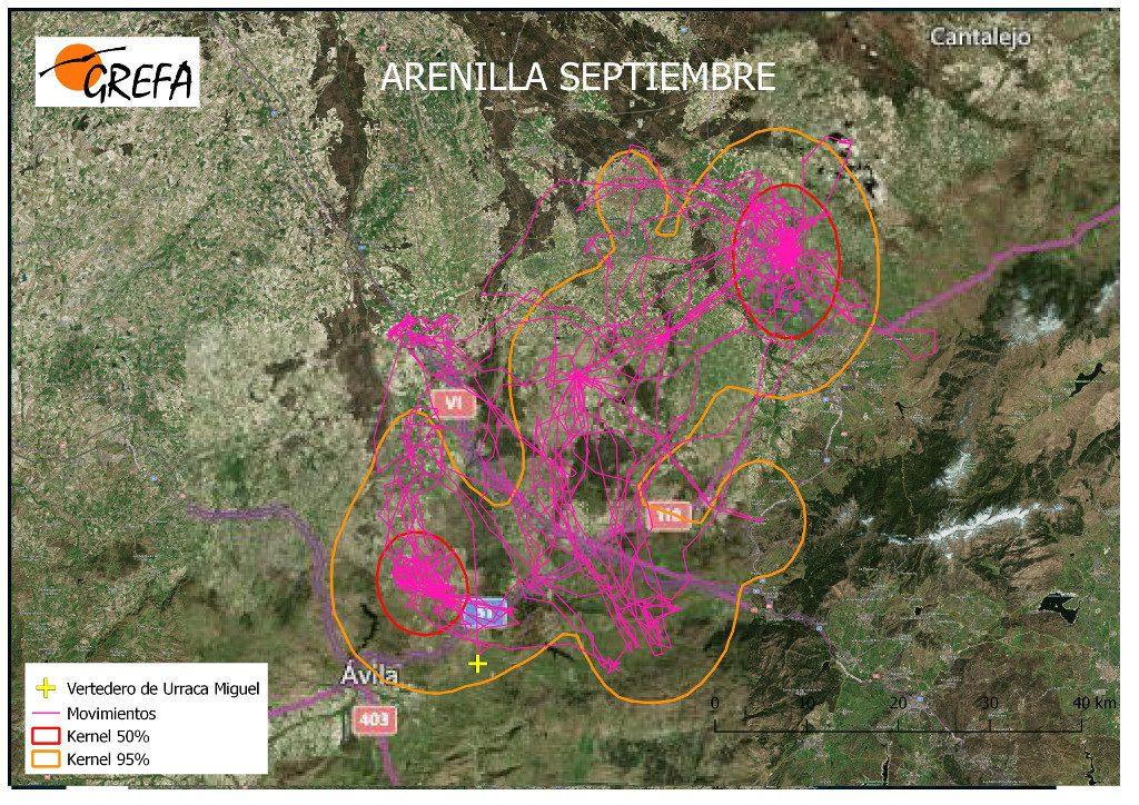 Figura 7. Movimientos (morado) y área vital (rojo) y de campeo (naranja) de Arenilla durante el mes de septiembre.