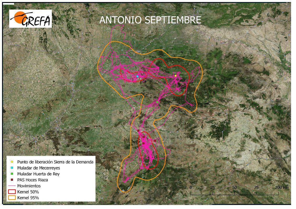 Figura 9. Movimientos (morado) y área vital (rojo) y de campeo (naranja) de Antonio durante el mes de septiembre.