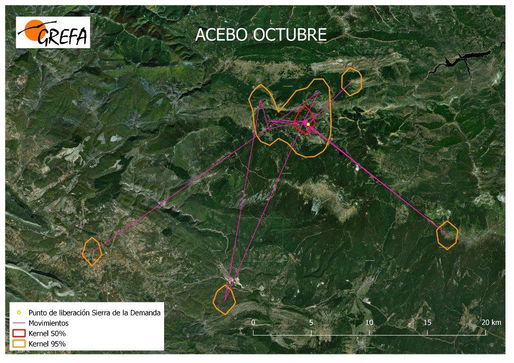 Movimientos (morado) y área vital (rojo) y de campeo (naranja) de Acebo durante el mes de octubre.