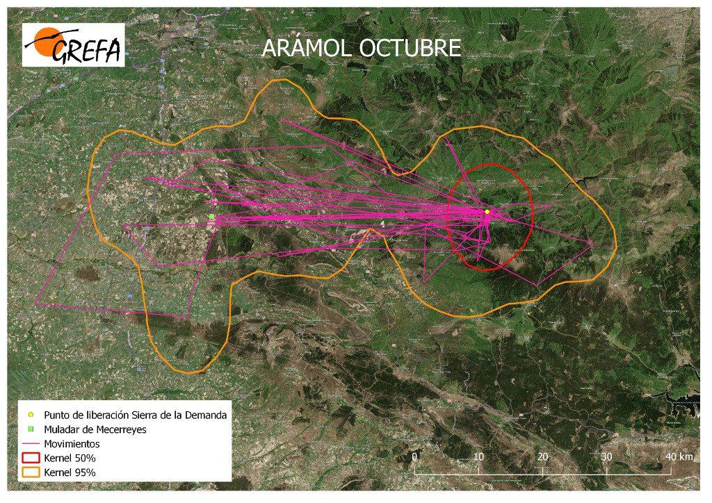 Figura 2. Movimientos (morado) y área vital (rojo) y de campeo (naranja) de Arámol durante el mes de octubre.
