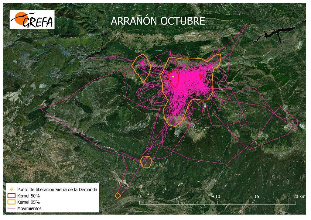 Figura 3. Movimientos (morado) y área vital (rojo) y de campeo (naranja) de Arrañón durante el mes de octubre.