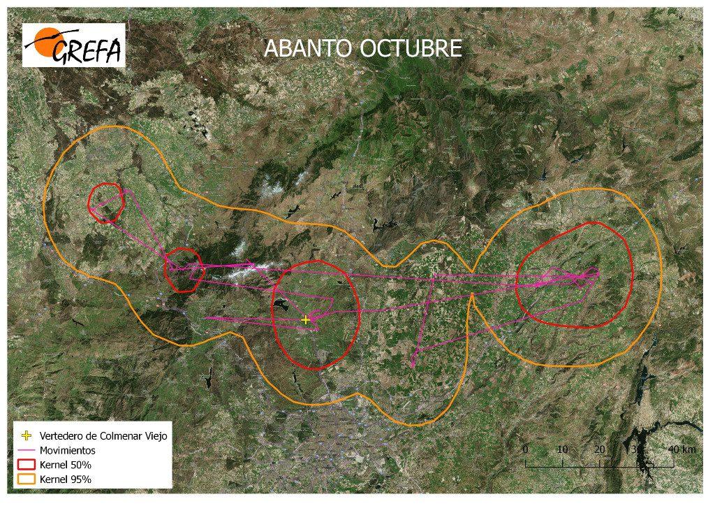Figura 4. Movimientos (morado) y área vital (rojo) y de campeo (naranja) de Abanto durante el mes de octubre.