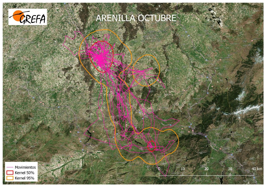 Figura 5. Movimientos (morado) y área vital (rojo) y de campeo (naranja) de Arenilla durante el mes de octubre.