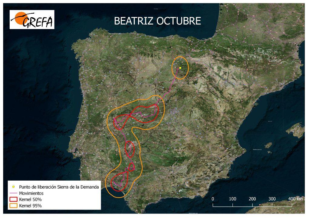 Figura 11. Movimientos (morado) y área vital (rojo) y de campeo (naranja) de Beatriz durante el mes de octubre.