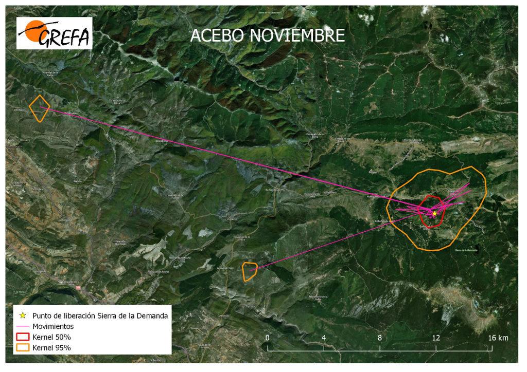 Figura 1. Movimientos (morado) y área vital (rojo) y de campeo (naranja) de Acebo durante el mes de noviembre.