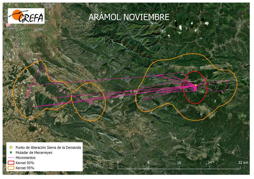 Figura 2. Movimientos (morado) y área vital (rojo) y de campeo (naranja) de Arámol durante el mes de noviembre.