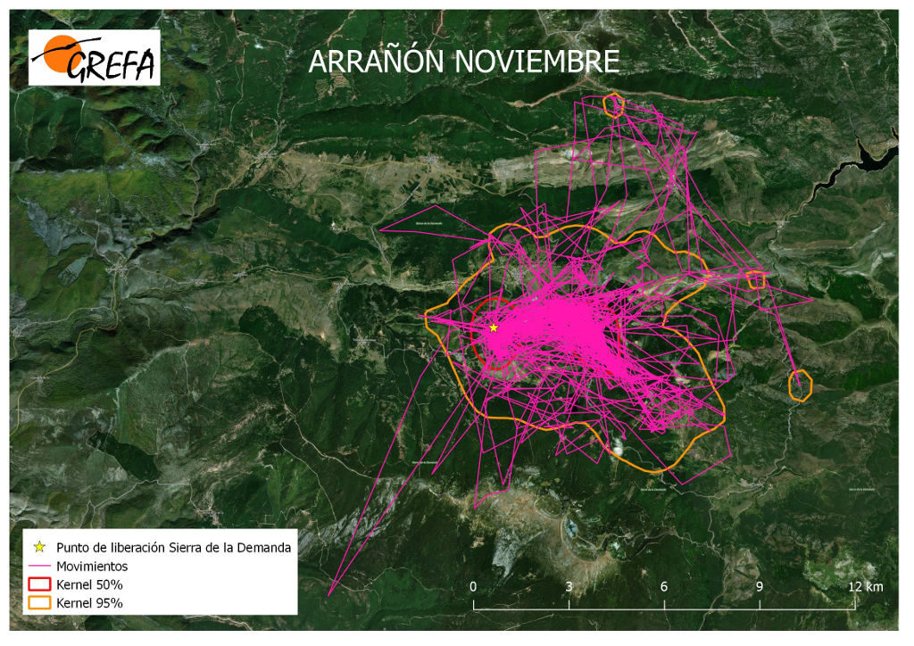Figura 3. Movimientos (morado) y área vital (rojo) y de campeo (naranja) de Arrañón durante el mes de noviembre.