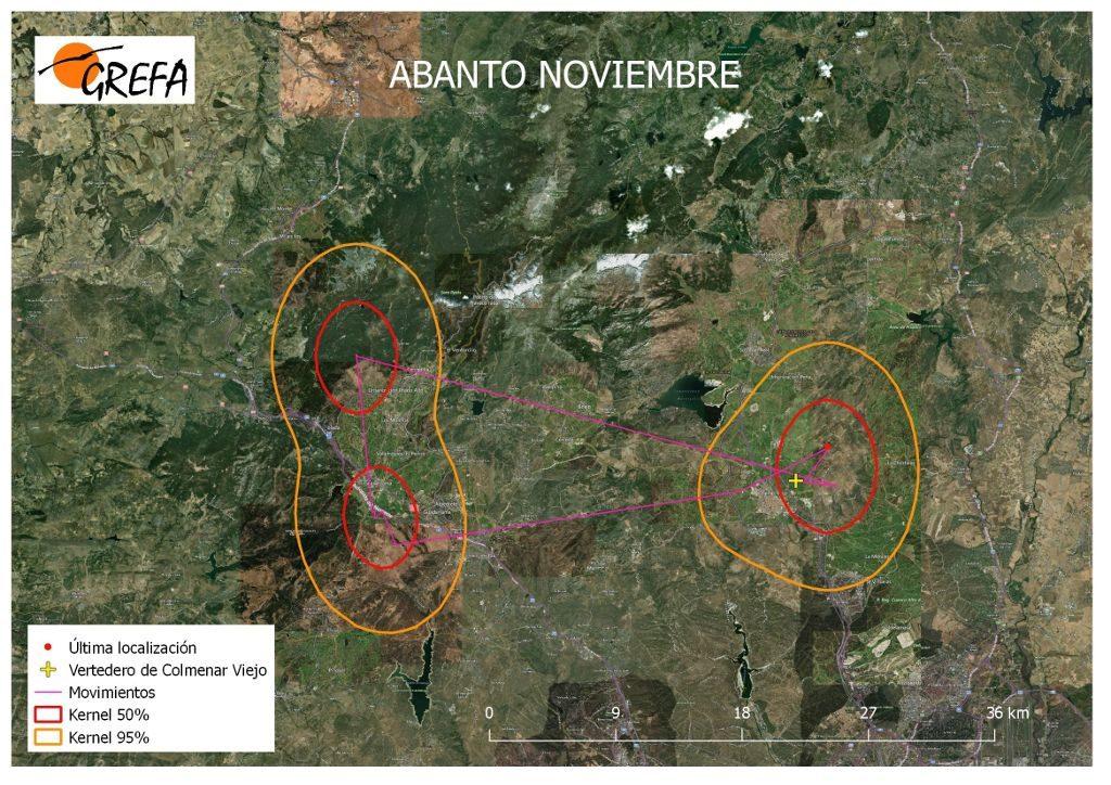 Figura 4. Movimientos (morado) y área vital (rojo) y de campeo (naranja) de Abanto durante el mes de noviembre.
