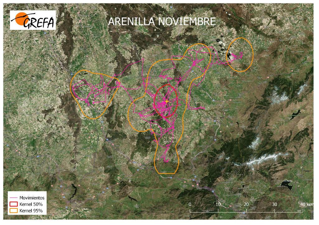 Figura 5. Movimientos (morado) y área vital (rojo) y de campeo (naranja) de Arenilla durante el mes de noviembre.