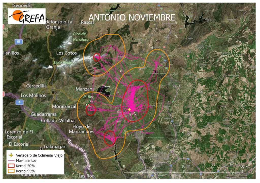 Figura 7. Movimientos (morado) y área vital (rojo) y de campeo (naranja) de Antonio durante el mes de noviembre.