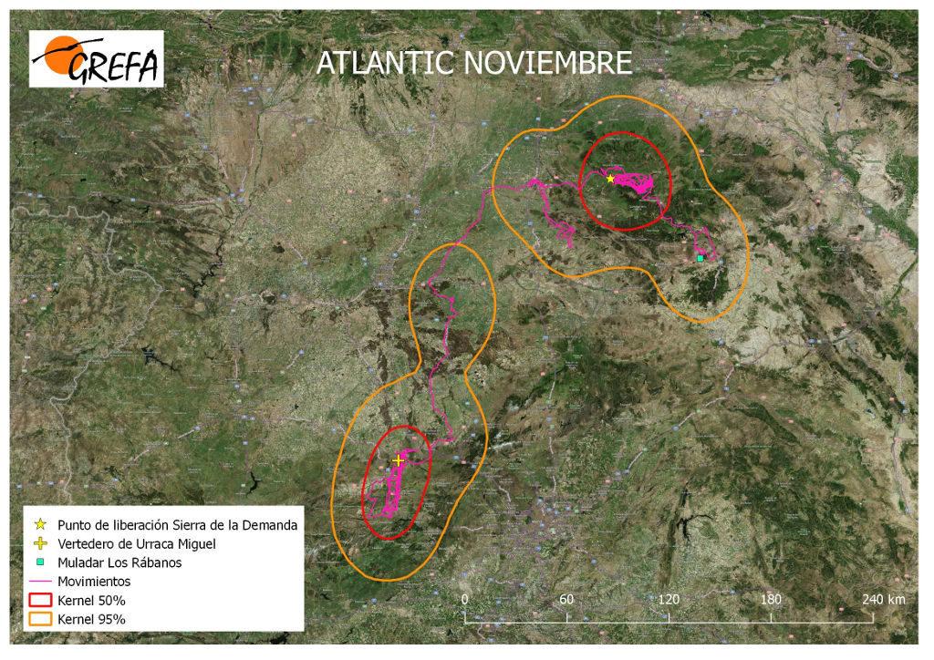 Figura 8. Movimientos (morado) y área vital (rojo) y de campeo (naranja) de Atlantic durante el mes de noviembre.