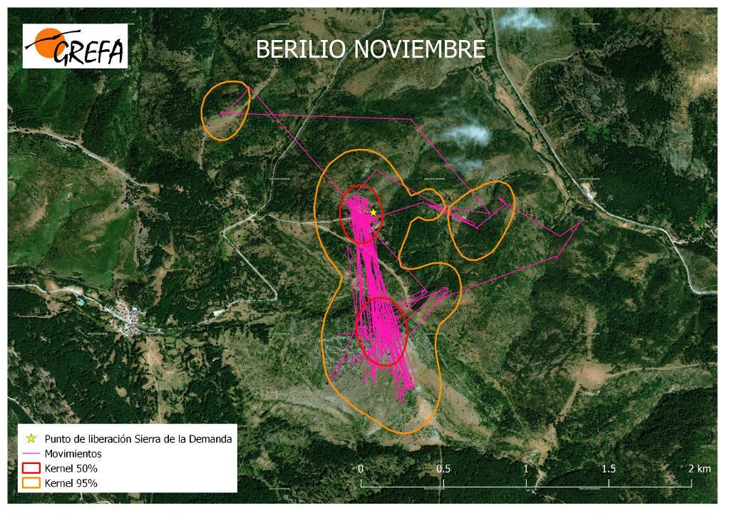 Figura 9. Movimientos (morado) y área vital (rojo) y de campeo (naranja) de Berilio durante el mes de noviembre.