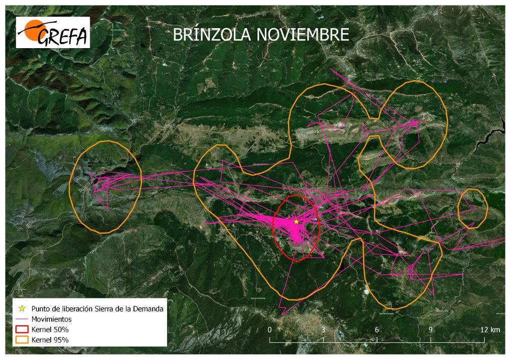 Figura 12. Movimientos (morado) y área vital (rojo) y de campeo (naranja) de Brínzola durante el mes de noviembre.