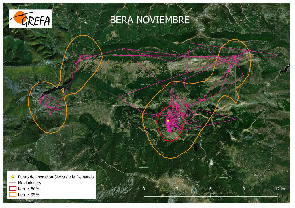 Figura 13. Movimientos (morado) y área vital (rojo) y de campeo (naranja) de Bera durante el mes de noviembre.