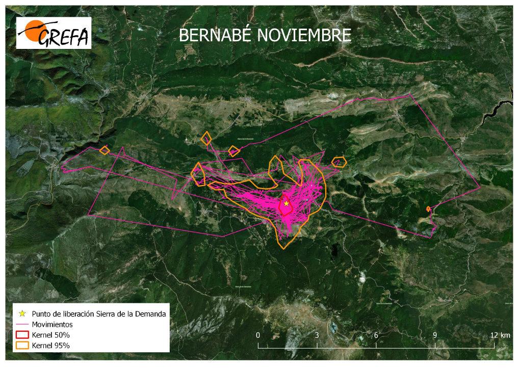 Figura 14. Movimientos (morado) y área vital (rojo) y de campeo (naranja) de Bernabé durante el mes de noviembre.