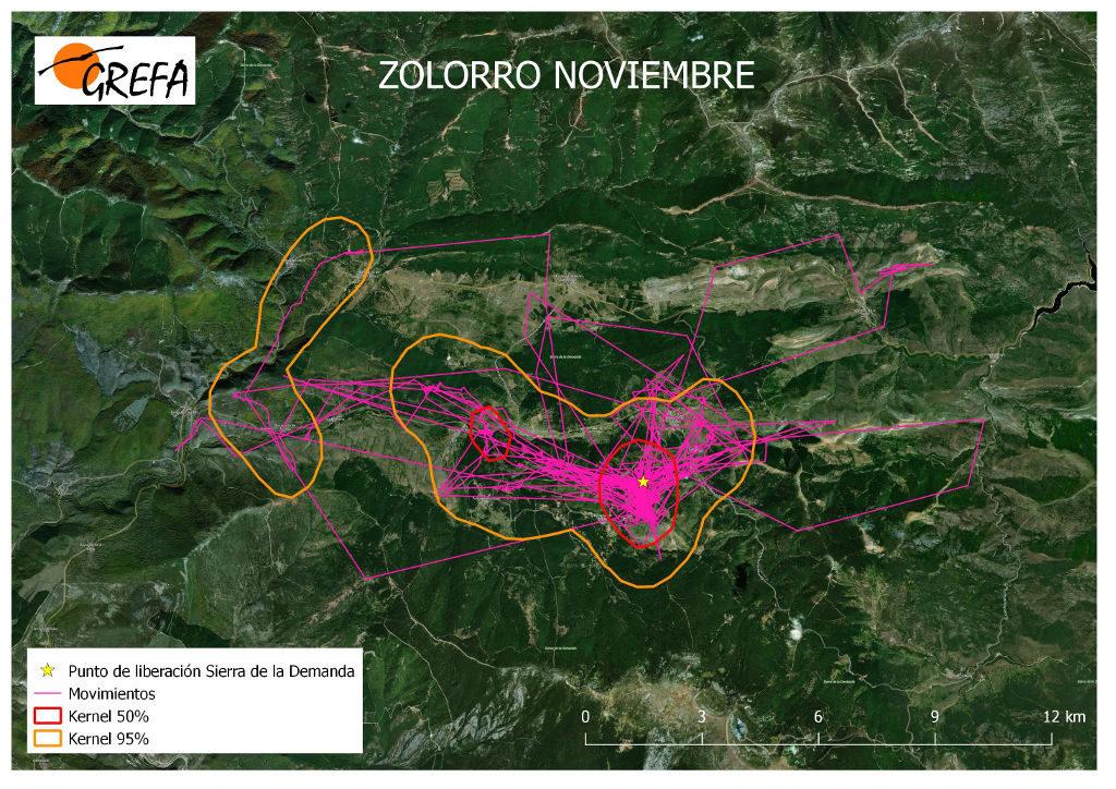 Figura 15. Movimientos (morado) y área vital (rojo) y de campeo (naranja) de Zolorro durante el mes de noviembre.