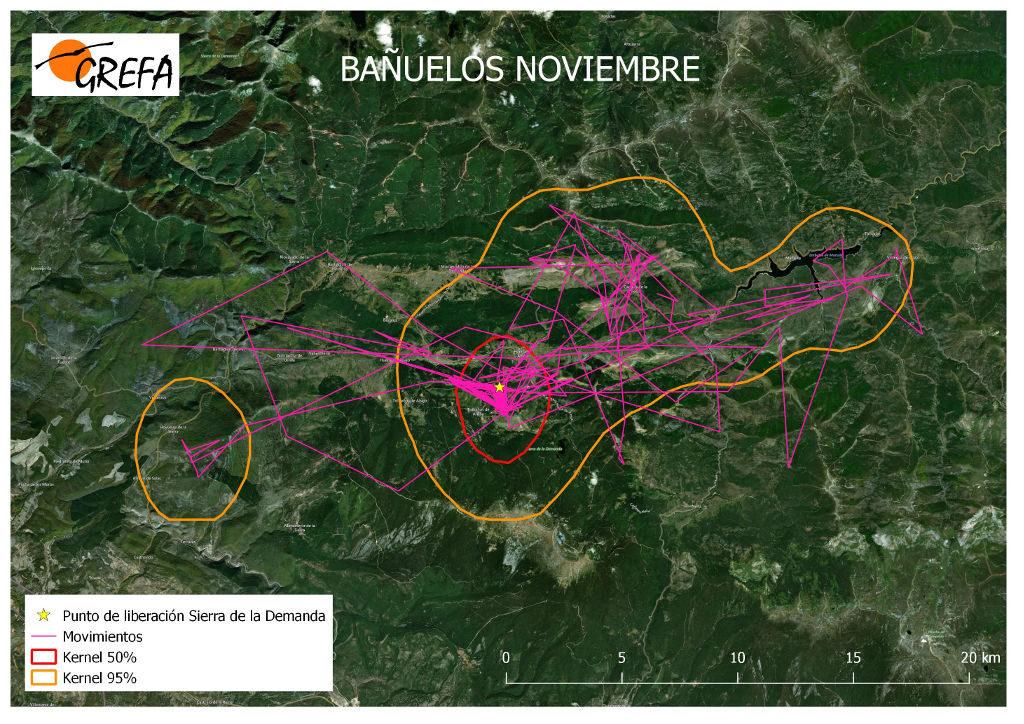 Figura 16. Movimientos (morado) y área vital (rojo) y de campeo (naranja) de Bañuelos durante el mes de noviembre.