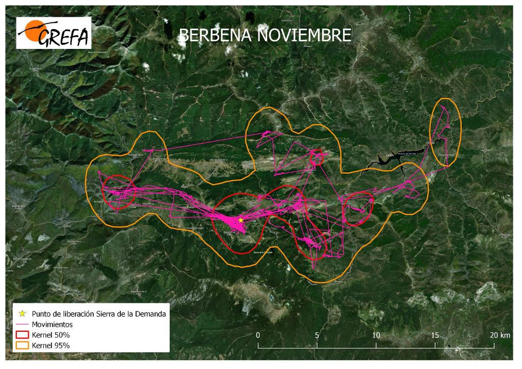 Figura 17. Movimientos (morado) y área vital (rojo) y de campeo (naranja) de Berbena durante el mes de noviembre.