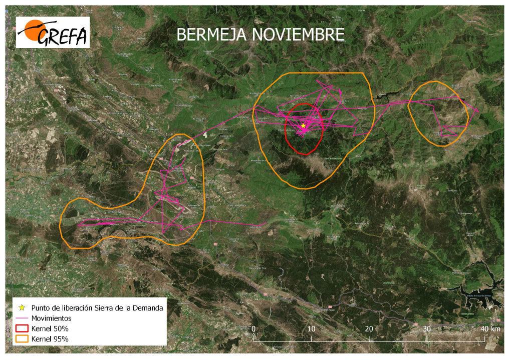 Figura 18. Movimientos (morado) y área vital (rojo) y de campeo (naranja) de Bermeja durante el mes de noviembre.