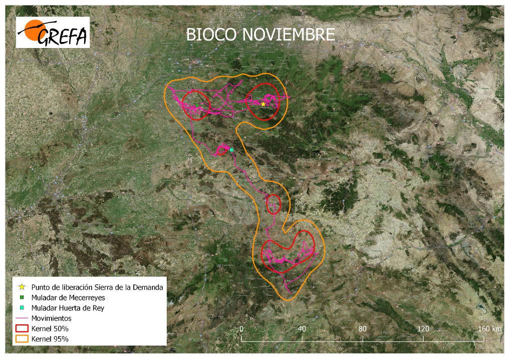 Figura 19. Movimientos (morado) y área vital (rojo) y de campeo (naranja) de Bioco durante el mes de noviembre.