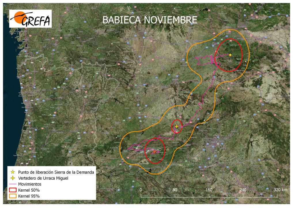 Figura 20. Movimientos (morado) y área vital (rojo) y de campeo (naranja) de Babieca durante el mes de noviembre.