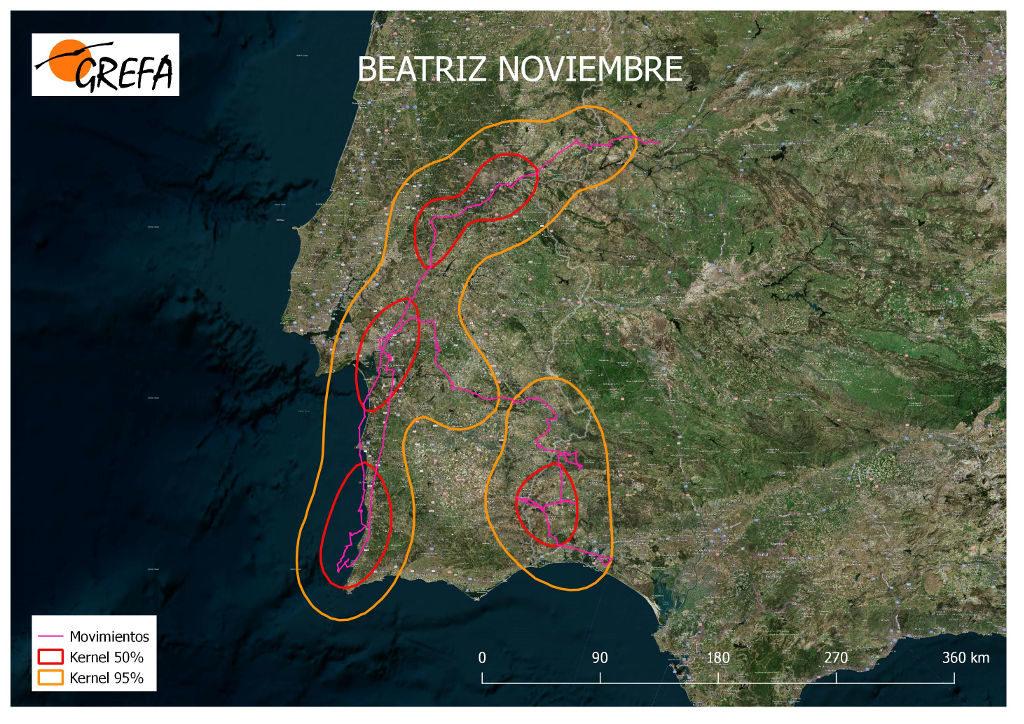 Figura 21. Movimientos (morado) y área vital (rojo) y de campeo (naranja) de Beatriz durante el mes de noviembre.