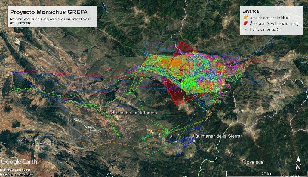 Mapa 1: Movimientos de los ejemplares fijados en el núcleo de liberación durante el mes de diciembre. El polígono rojo muestra el área vital (Kernel 50%) y el polígono naranja el área de campeo habitual.