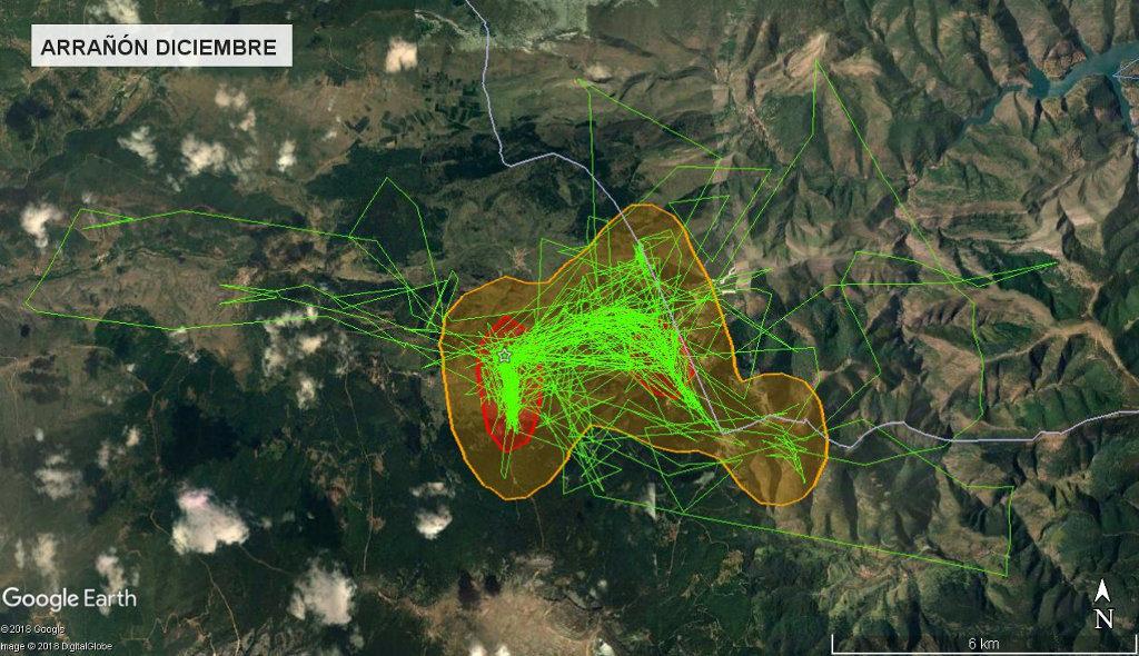 Mapa 2: Movimientos de Arrañón durante el mes de diciembre. Se muestra el área vital en rojo (Kernel 50%) y el área de campeo (Kernel 95%).