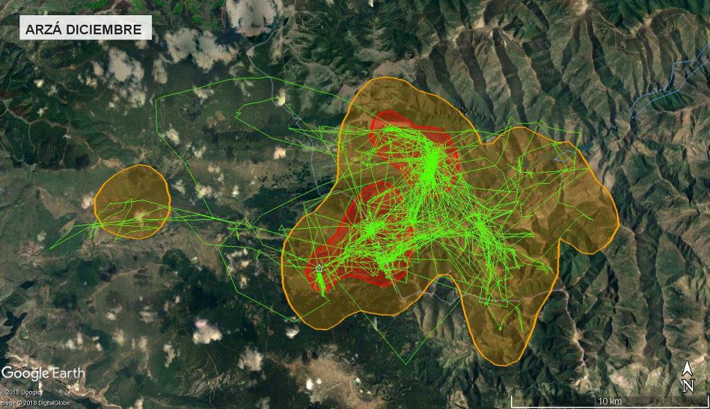 Mapa 3: Movimientos de Arzá durante el mes de diciembre. Se muestra el área vital en rojo (Kernel 50%) y el área de campeo (Kernel 95%).