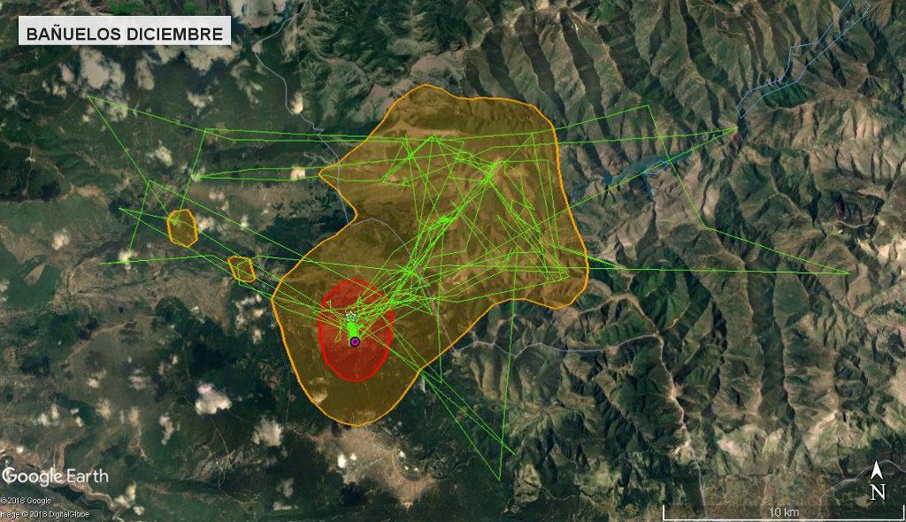 Mapa 4: Movimientos de Bañuelos durante el mes de diciembre. Se muestra el área vital en rojo (Kernel 50%) y el área de campeo (Kernel 95%).