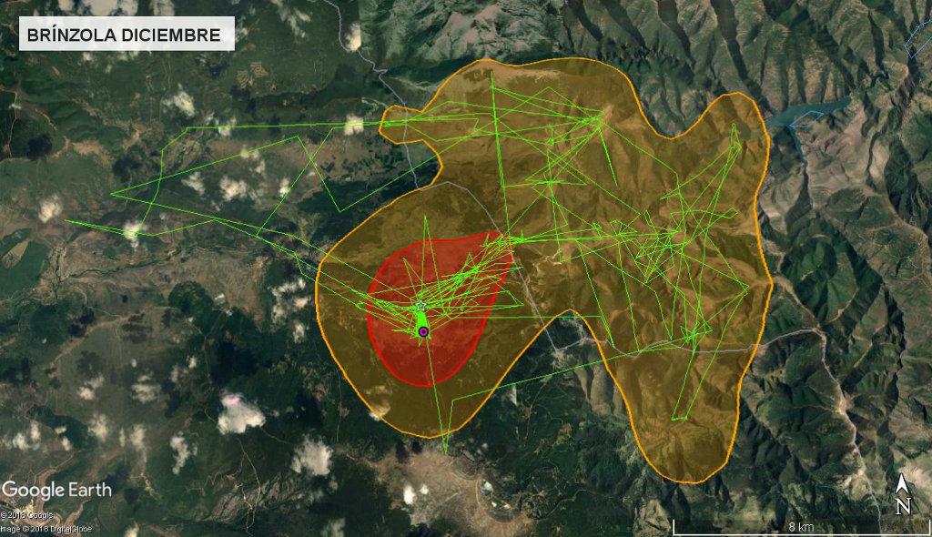 Mapa 6: Movimientos de Brínzola durante el mes de diciembre. Se muestra el área vital en rojo (Kernel 50%) y el área de campeo (Kernel 95%).