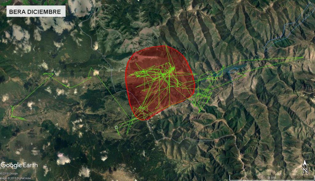 Mapa 7: Movimientos de Bera durante el mes de diciembre. Se muestra el área vital en rojo (Kernel 50%).