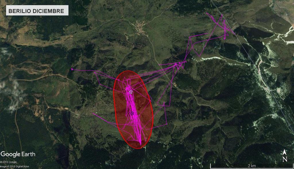 Mapa 9: Movimientos de Berilio durante el mes de diciembre. Se muestra el área vital en rojo (Kernel 50%).