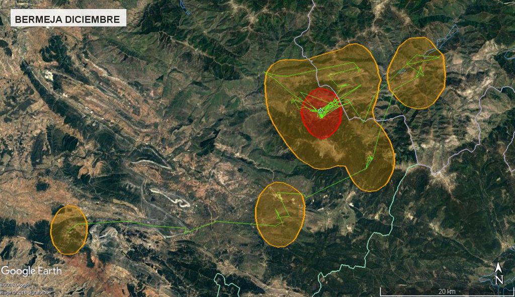 Mapa 11: Movimientos de Bermeja durante el mes de diciembre. Se muestra el área vital en rojo (Kernel 50%) y el área de campeo (Kernel 95%).