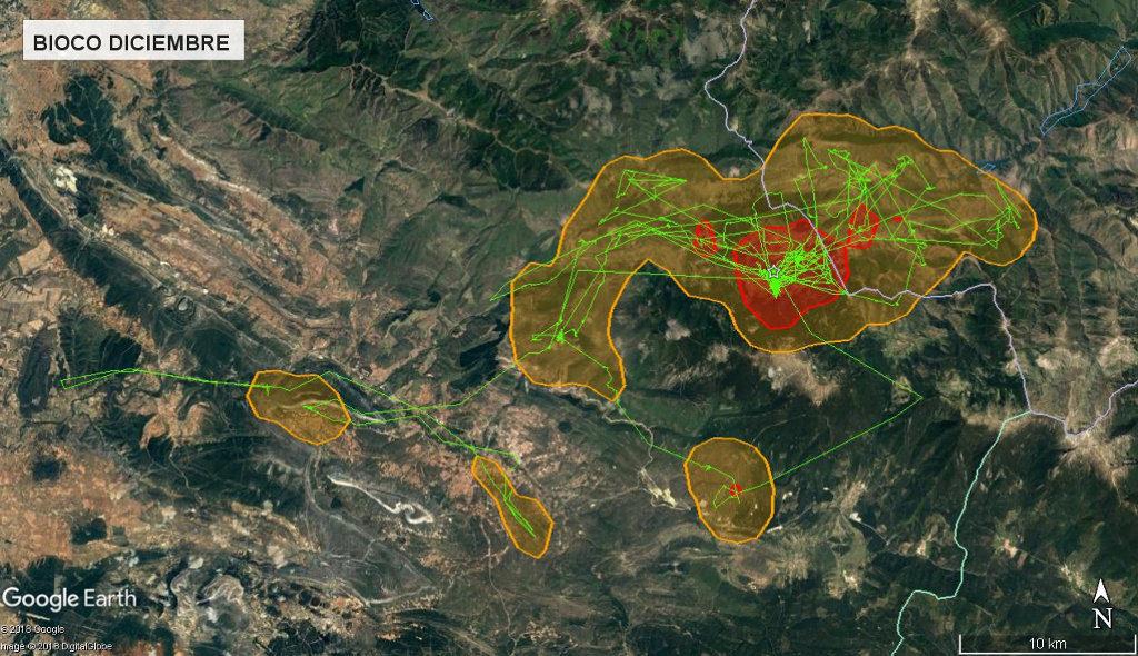 Mapa 12: Movimientos de Bioco durante el mes de diciembre. Se muestra el área vital en rojo (Kernel 50%) y el área de campeo (Kernel 95%).