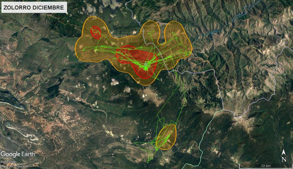 Mapa 13: Movimientos de Zolorro durante el mes de diciembre. Se muestra el área vital en rojo (Kernel 50%) y el área de campeo (Kernel 95%).